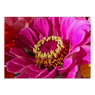 Cumpleaños para la sobrina, flor rosada del Zinnia Tarjeta De Felicitación