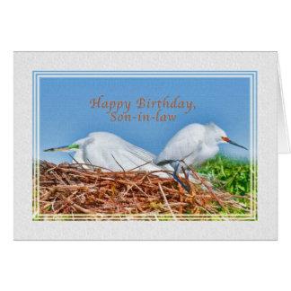 Cumpleaños, yerno, dos Egrets de la jerarquización Tarjeta De Felicitación