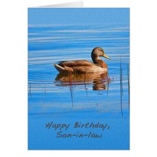 Cumpleaños, yerno, tarjeta del pato del pato