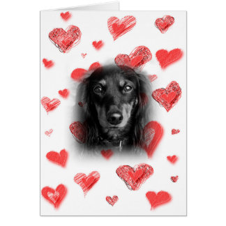 Dachshund con la tarjeta roja de los corazones