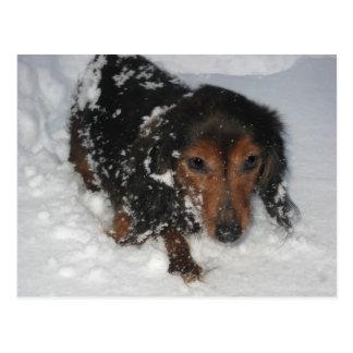 Dachshund en la postal de la nieve