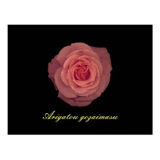 De agradecimiento en japonés en color de rosa rosa postales