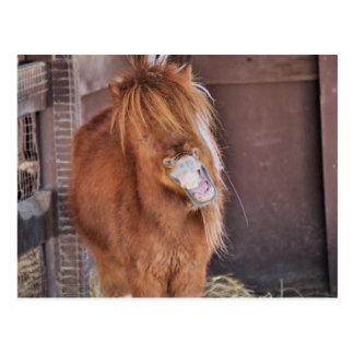 De caballo hilarante postal