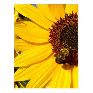 """de la """"diseños abeja reina del oso de peluche"""" del postal"""