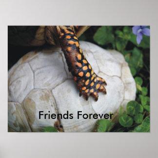 De los amigos tortuga Shell para siempre Póster