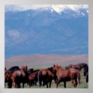 De los caballos poster del oeste salvaje hacia