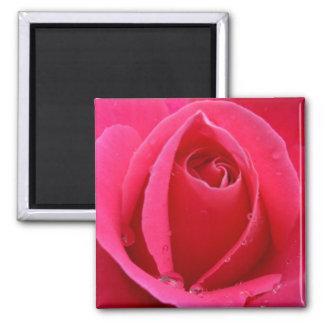 Decoración color de rosa rosada del recuerdo de imanes