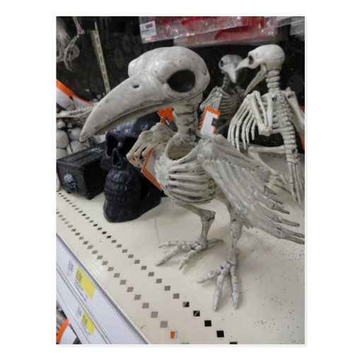 Decoración del esqueleto del pájaro postal