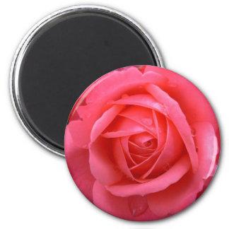 Decoración subió rosa color de rosa rosado del imán