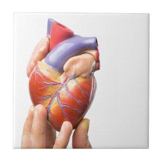 Dedos que muestran el corazón humano modelo en azulejo cuadrado pequeño