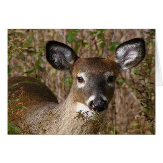 Deer joven Dia del Padre Tarjeta