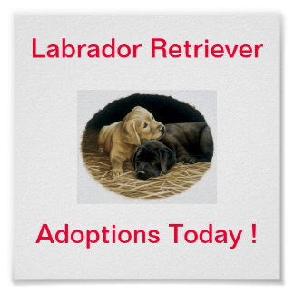 Del labrador retriever del perro de la adopción mu póster
