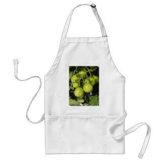Delantal Tomates verdes que cuelgan en la planta en el