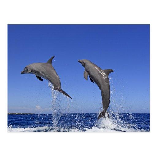 Delfin 2 postales