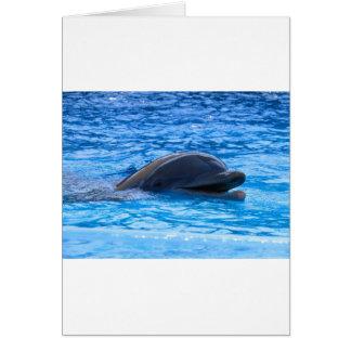 Delfín Felicitación