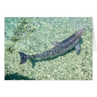 Delfín curvado bajo el agua tarjeta