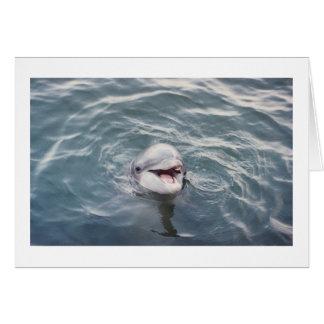 delfín de bottlenose atlántico tarjeta de felicitación