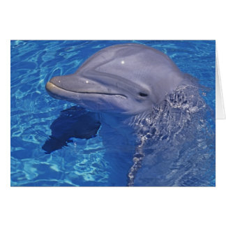 Delfín de Bottlenosed, Tursiops Truncatus Tarjeta De Felicitación
