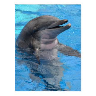Delfín de la Florida Postal