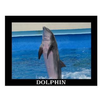 Delfín de Mississippi Postal