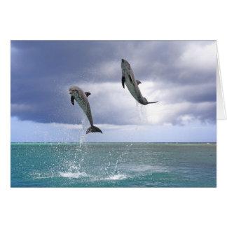 Delfin Delphin un Tuemmler más grueso Tursiops Tarjetón