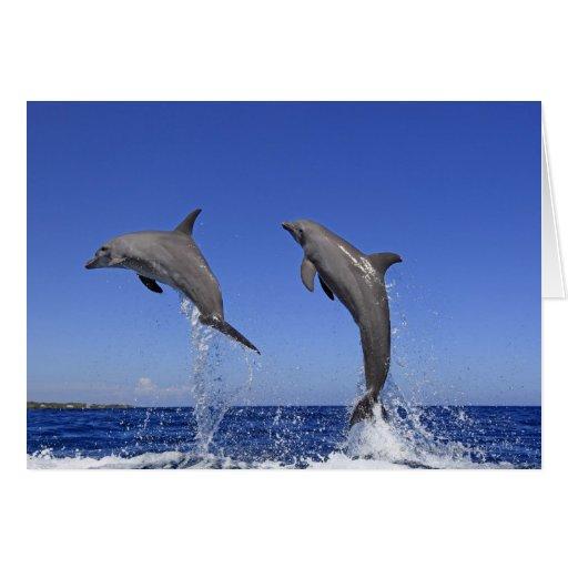 Delfin, Delphin, un Tuemmler más grueso, Tursiops  Felicitación
