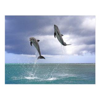 Delfin, Delphin, un Tuemmler más grueso, Tursiops  Postales