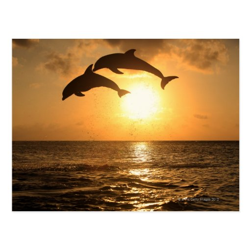 Delfin, Delphin, un Tuemmler más grueso, Tursiops Tarjeta Postal