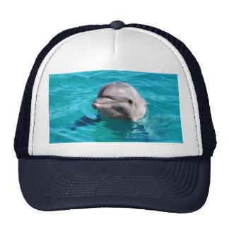 Delfín en foto del agua azul gorro