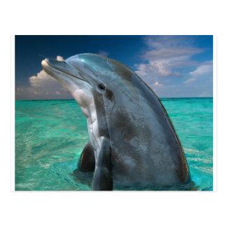 Delfín en las Bahamas Postal