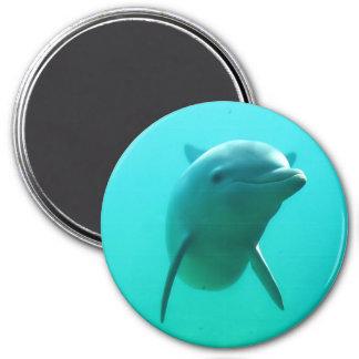 Delfín Imán