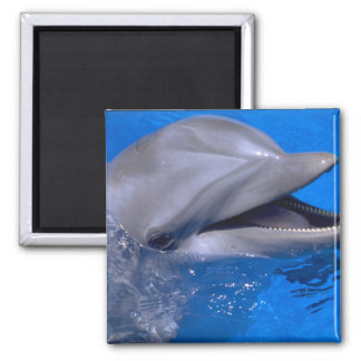 Delfín Imanes