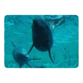 Delfín Comunicado