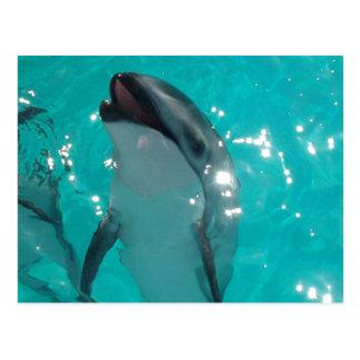 Delfín llamativo en piscina azulverde postal