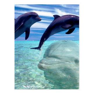 Delfín Postal