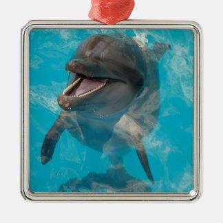 Delfín sonriente adorno navideño cuadrado de metal