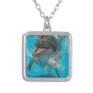 Delfín sonriente grimpola