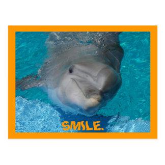 Delfín sonriente lindo postal