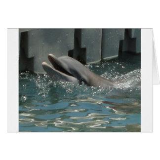 Delfín Tarjetas