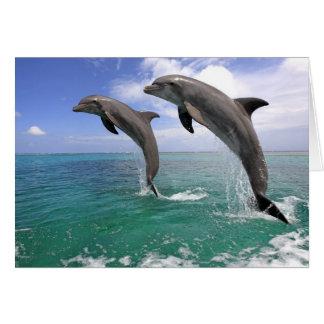 Delfin Tarjeta De Felicitación