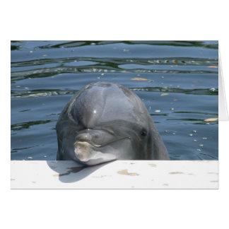 Delfín Tarjeta Pequeña