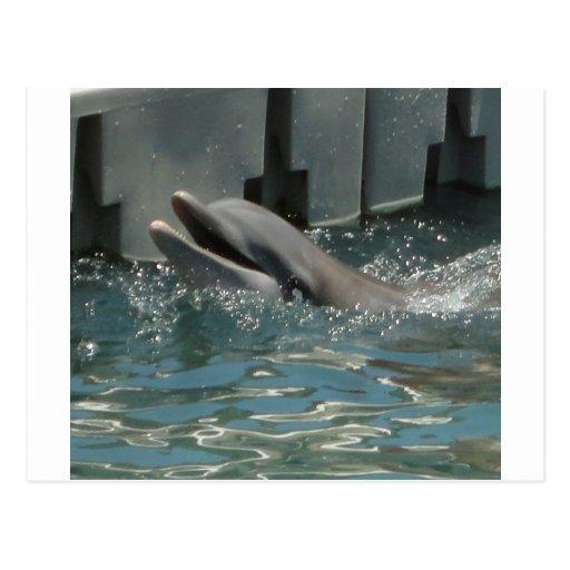 Delfín Tarjetas Postales