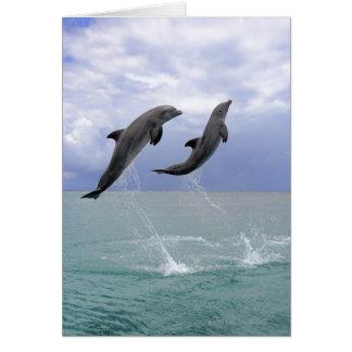 Delfin un Tuemmler más grueso Tarjeta