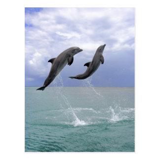 Delfin un Tuemmler más grueso Tarjetas Postales