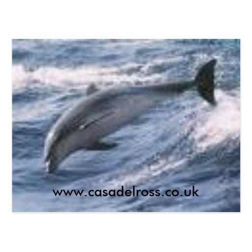 delfín, www.casadelross.co.uk tarjetas postales