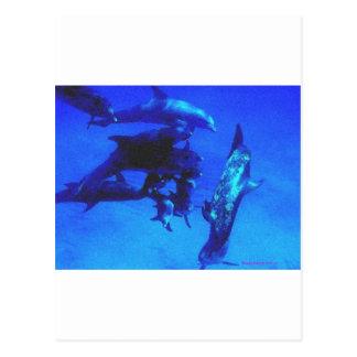 Delfínes azules (BiMiNi) Postal