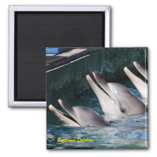 Delfínes de Bottlenose Imán
