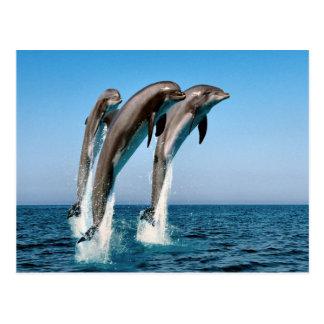 Delfínes de salto postal