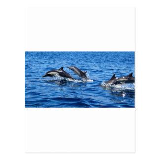 Delfínes juguetones postales