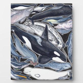 Delfines, orcas, belugas y narvales placa expositora